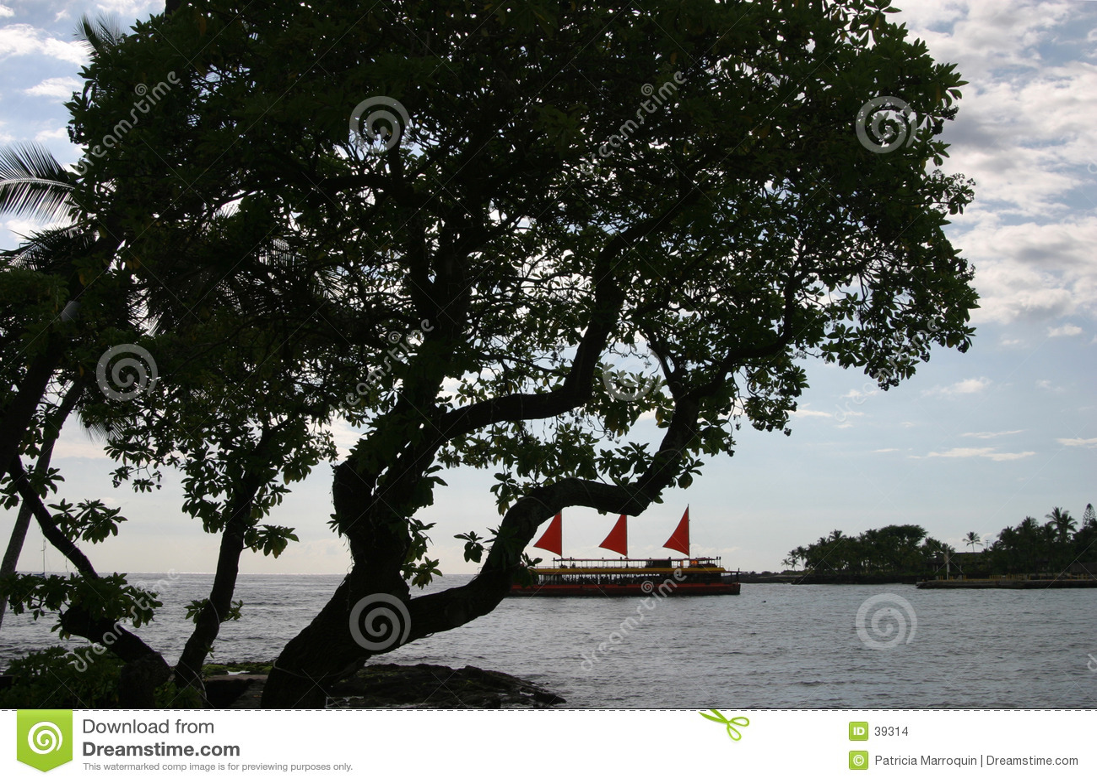 Árvore de Kona