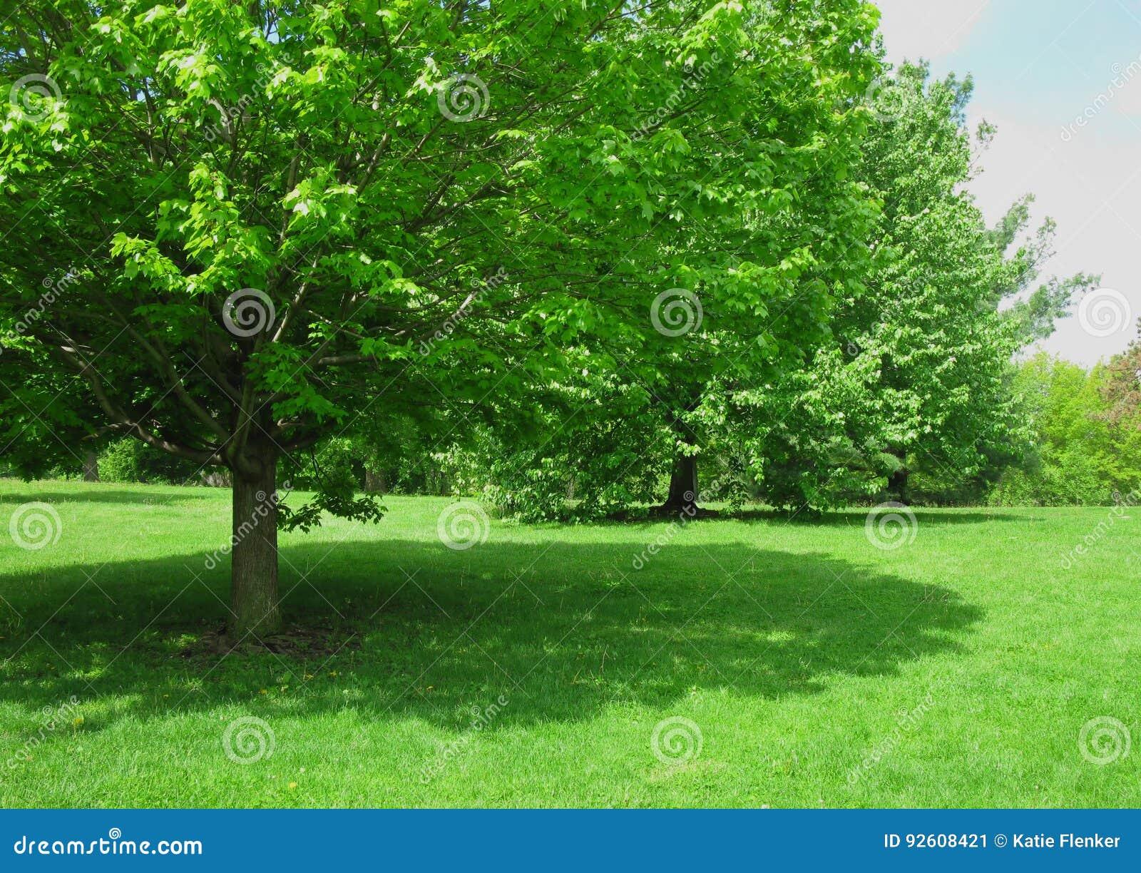 Árvore de máscara