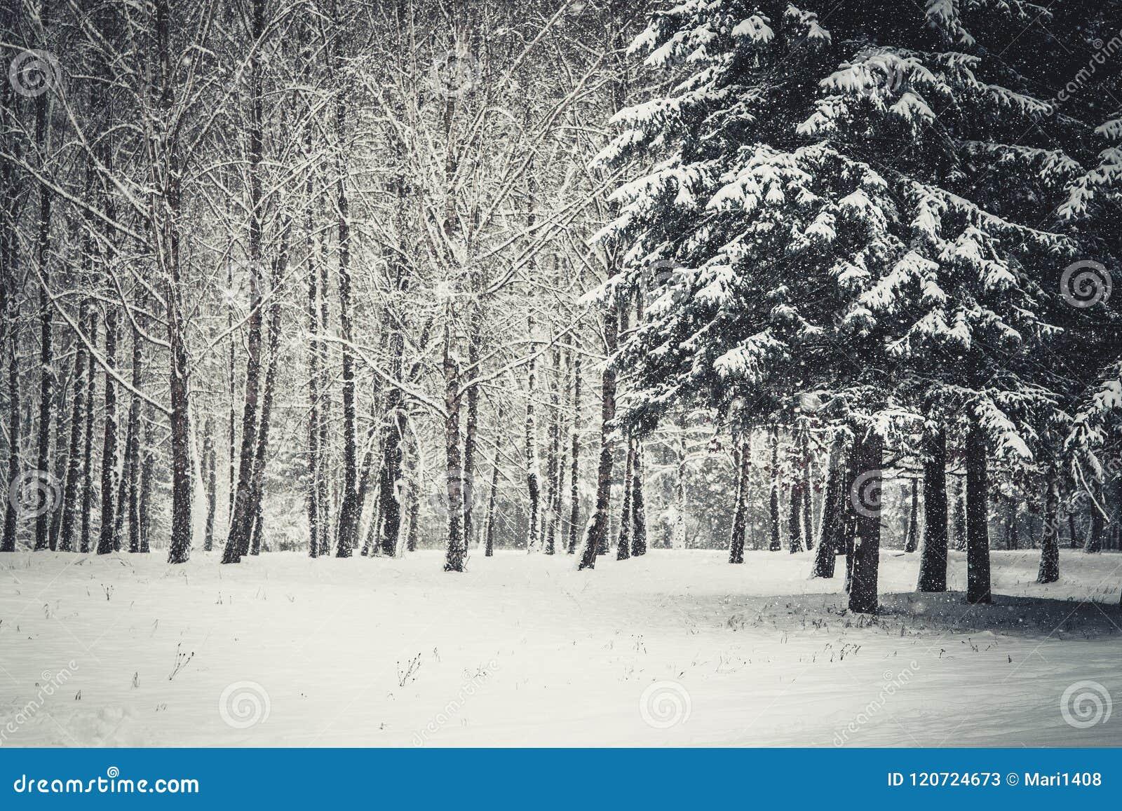 Árvore de Natal mágica da opinião da paisagem do conto de fadas fantástico