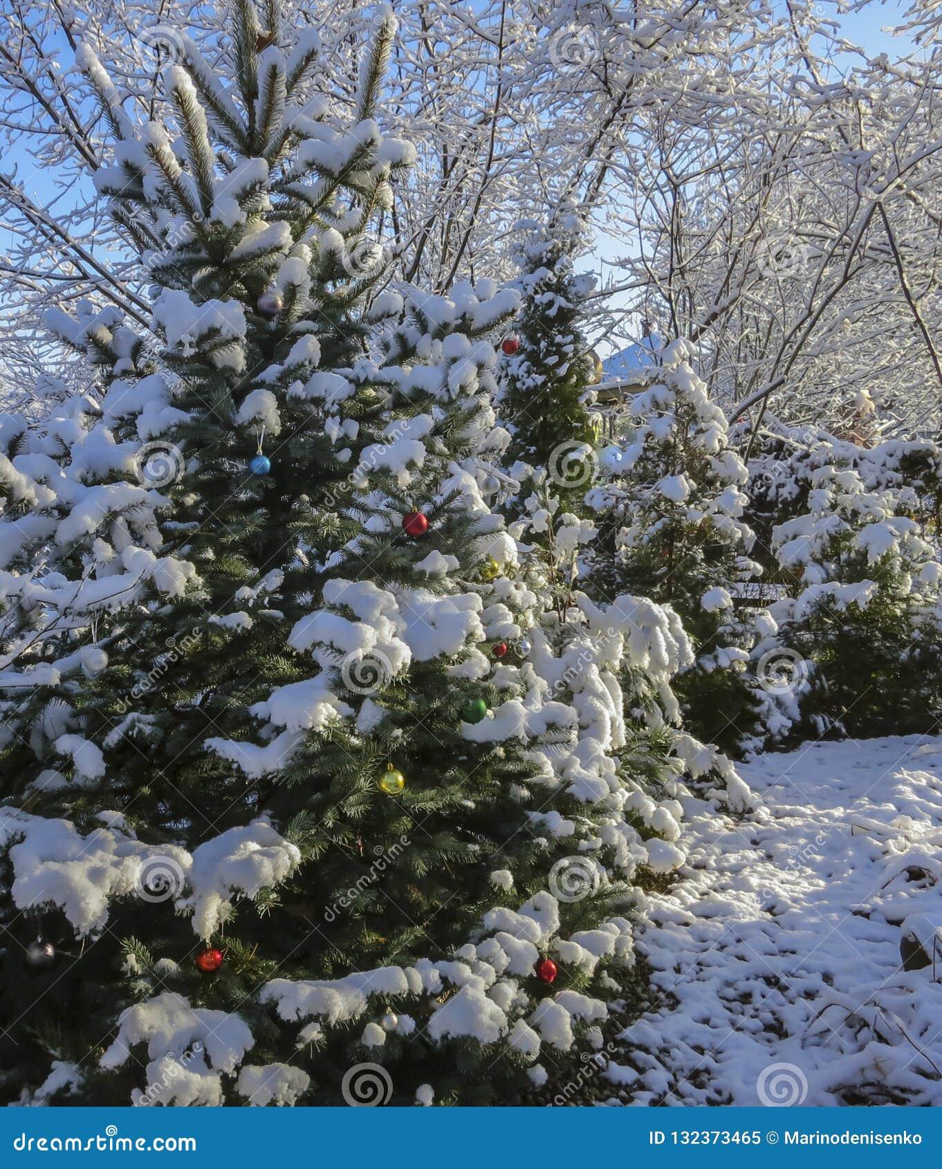 A árvore de Natal no jardim é decorada com decorações do Natal, seus ramos e agulhas