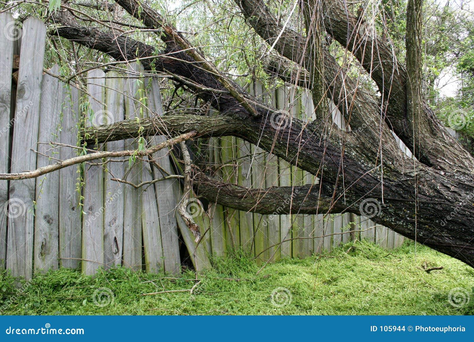Árvore de salgueiro caída