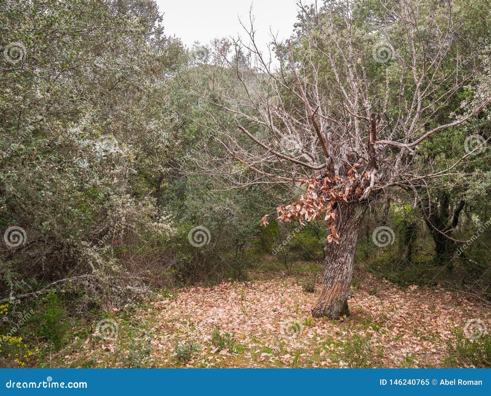 A árvore de vida com folha decíduo