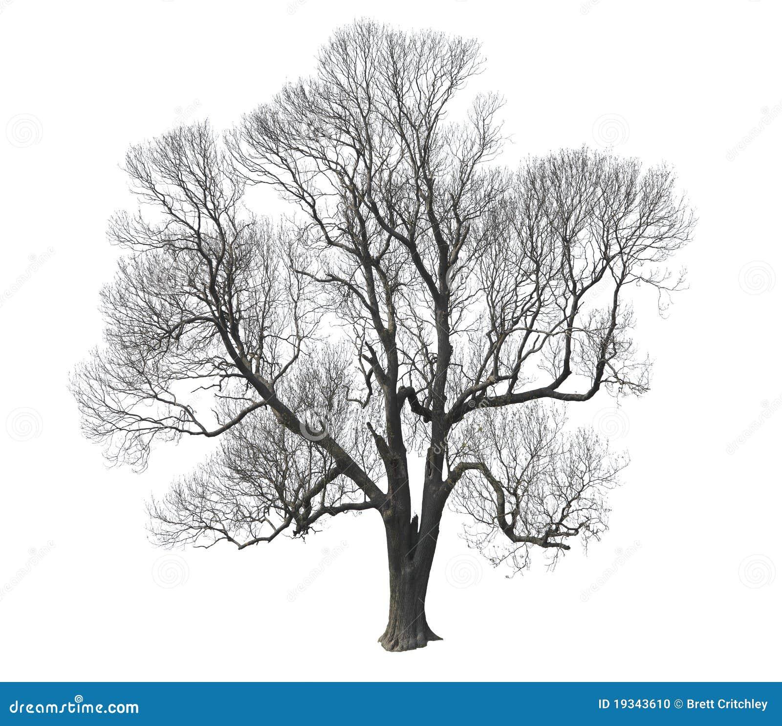 Árvore desencapada