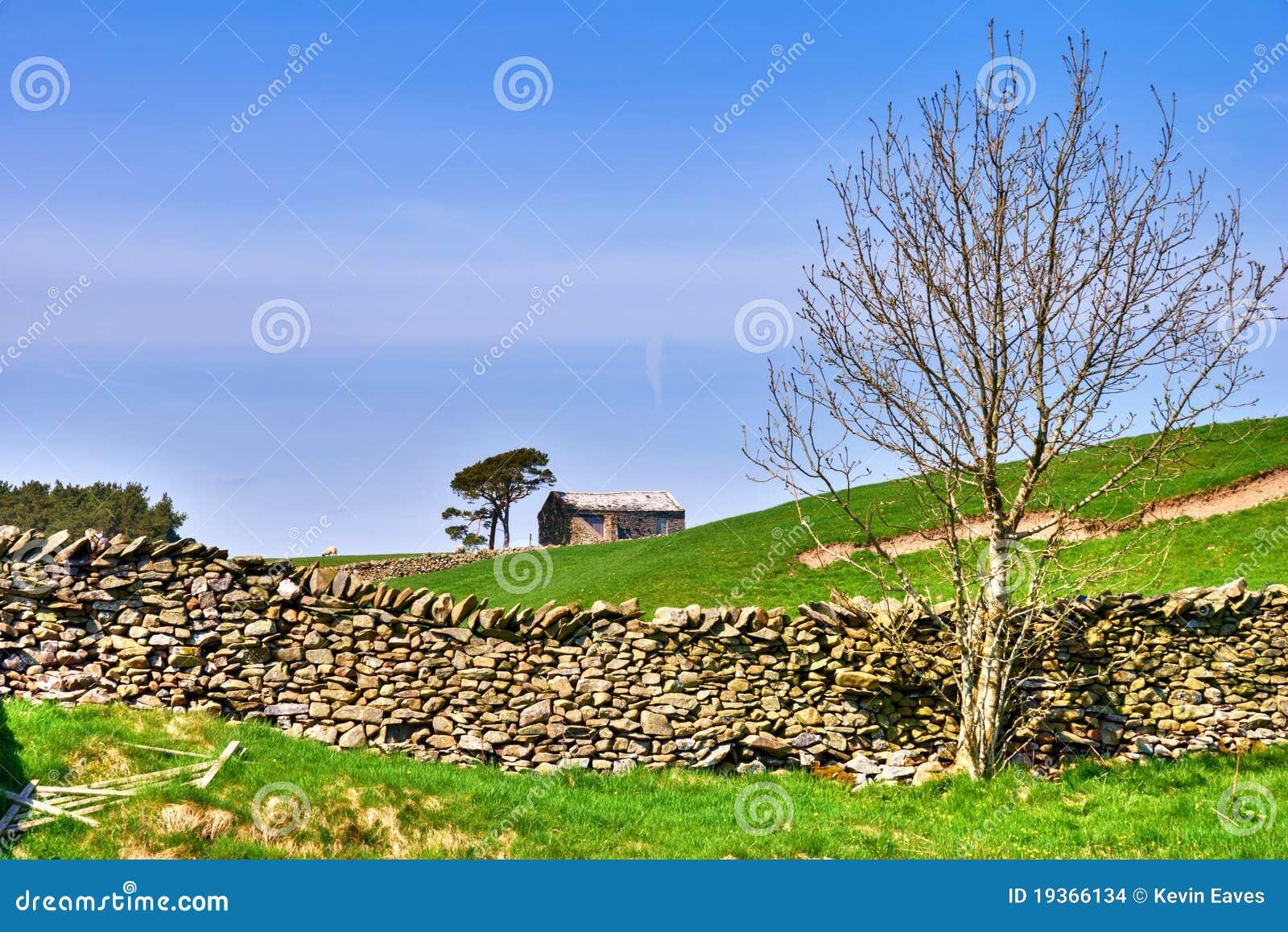 Árvore desencapada, celeiro, e parede de pedra seca.