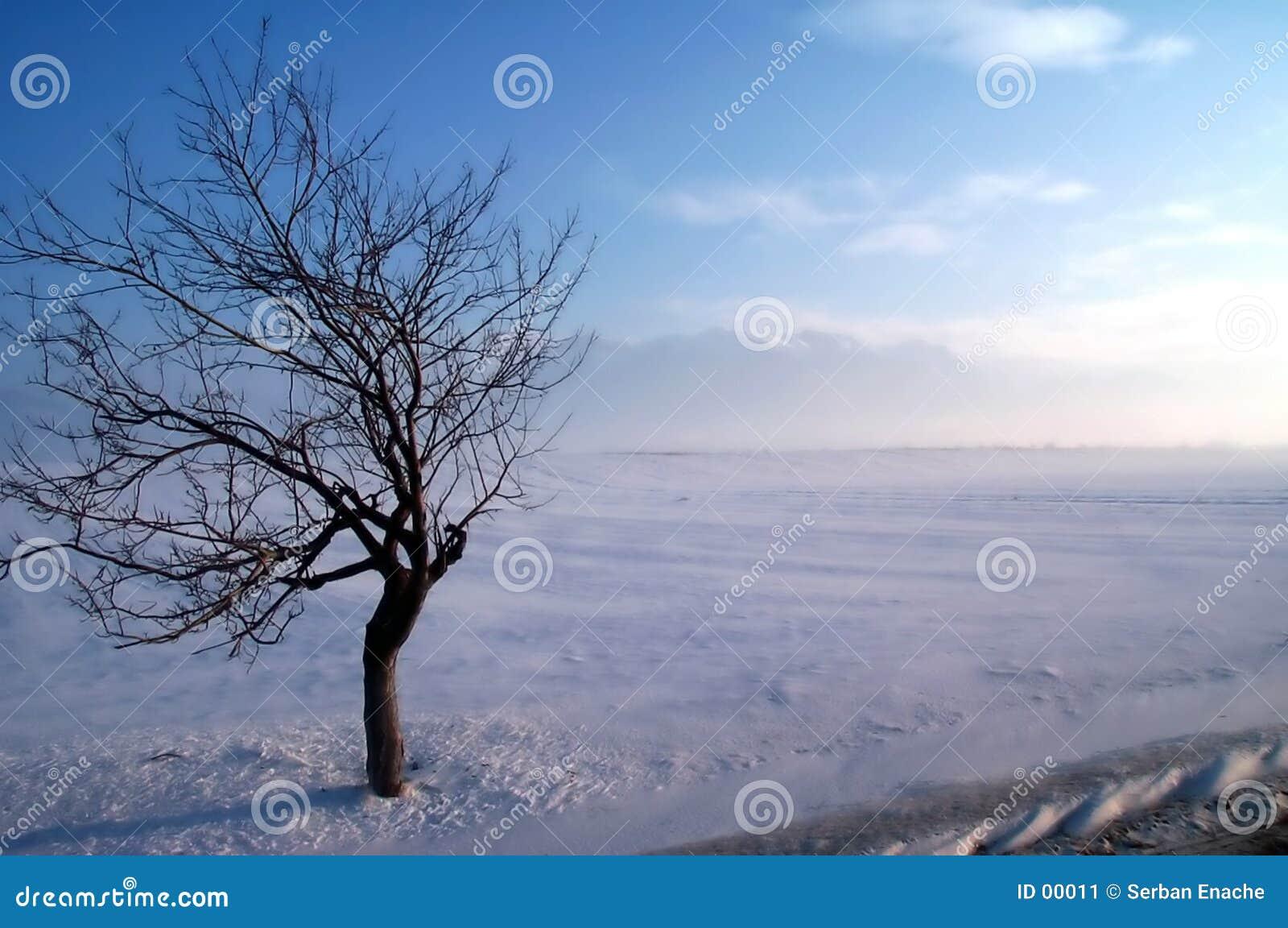 Árvore do caranguejo em uma tempestade do inverno