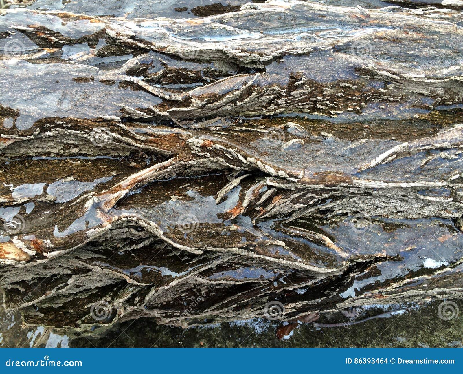 Árvore do close-up no gelo