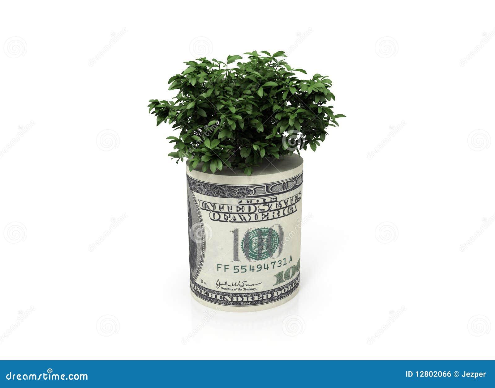 Árvore do dinheiro