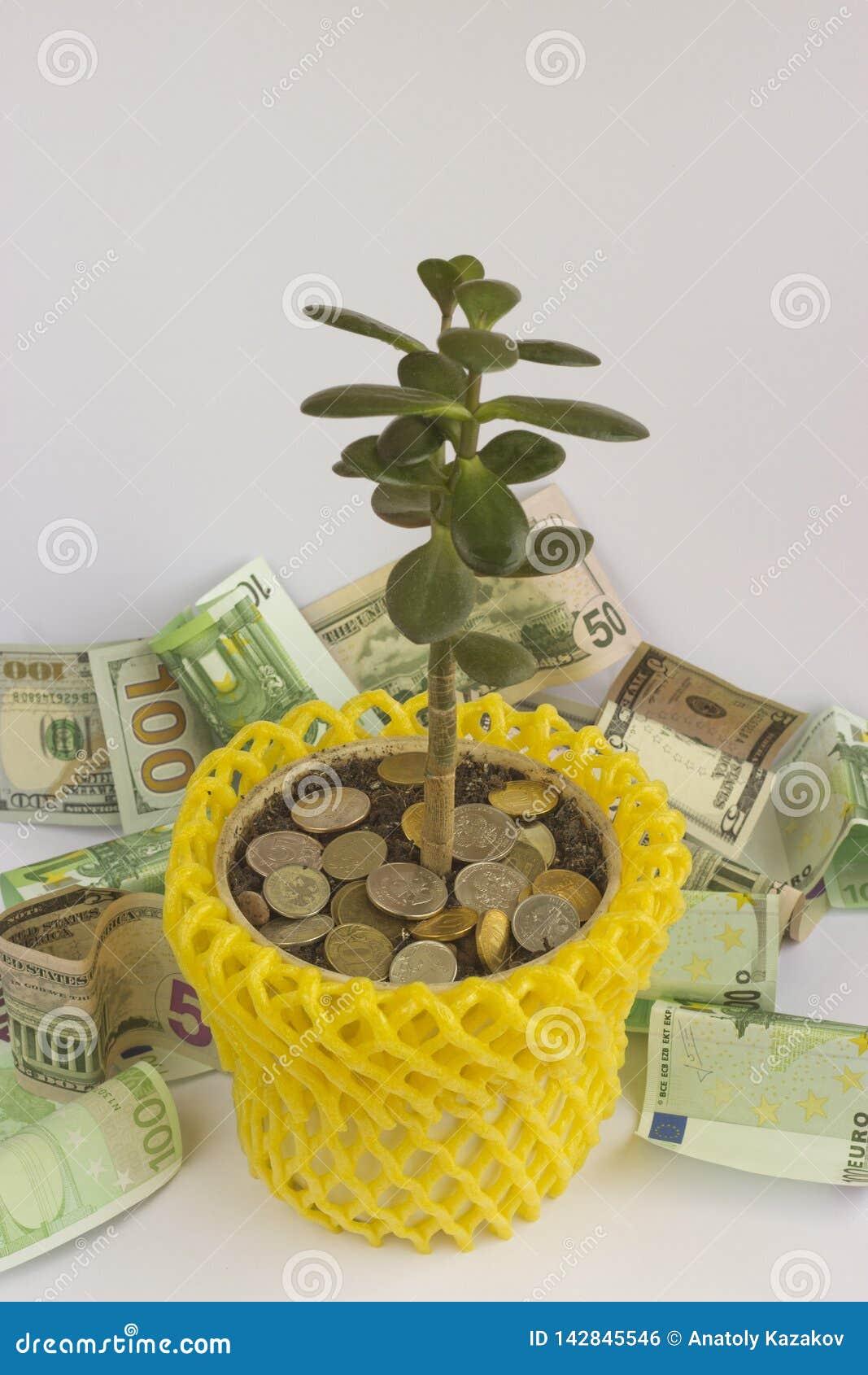Árvore do dinheiro no potenciômetro