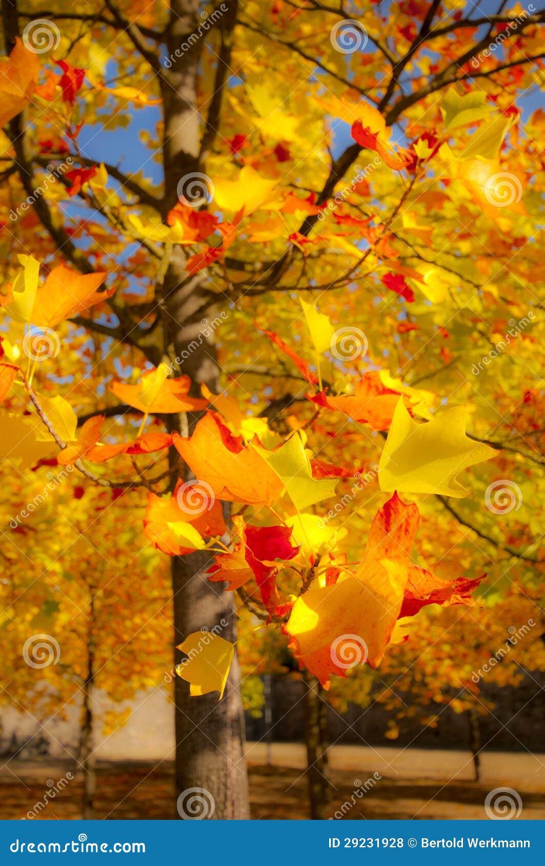 Download Árvore do outono foto de stock. Imagem de abóbora, declínio - 29231928