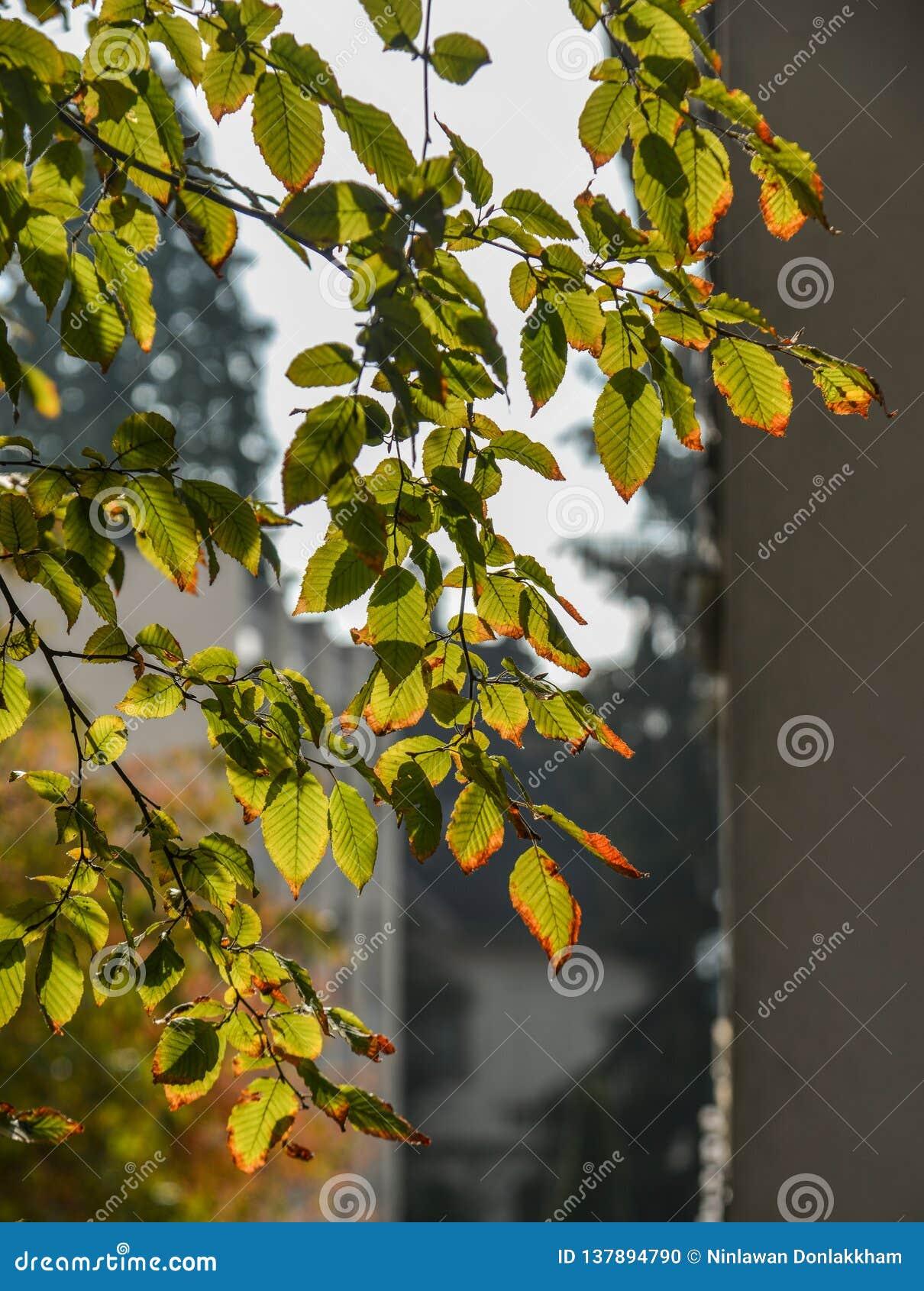 Árvore do outono no parque