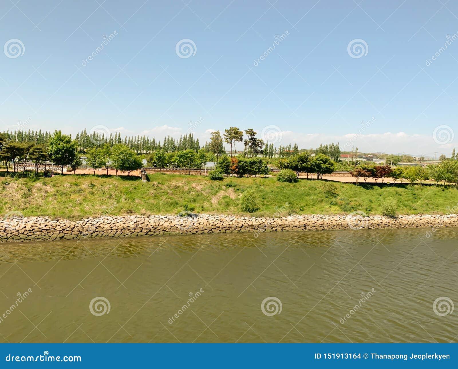 Árvore e céu do verde do lado do rio