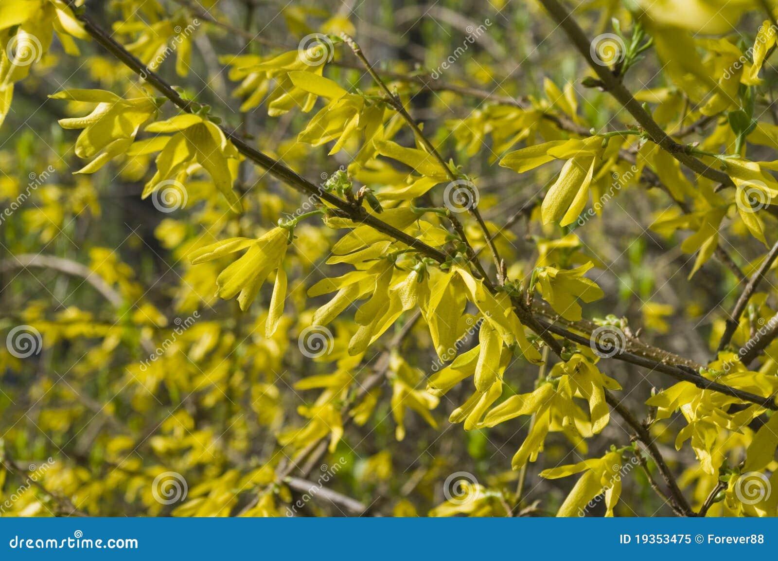 Árvore e flores amarelas