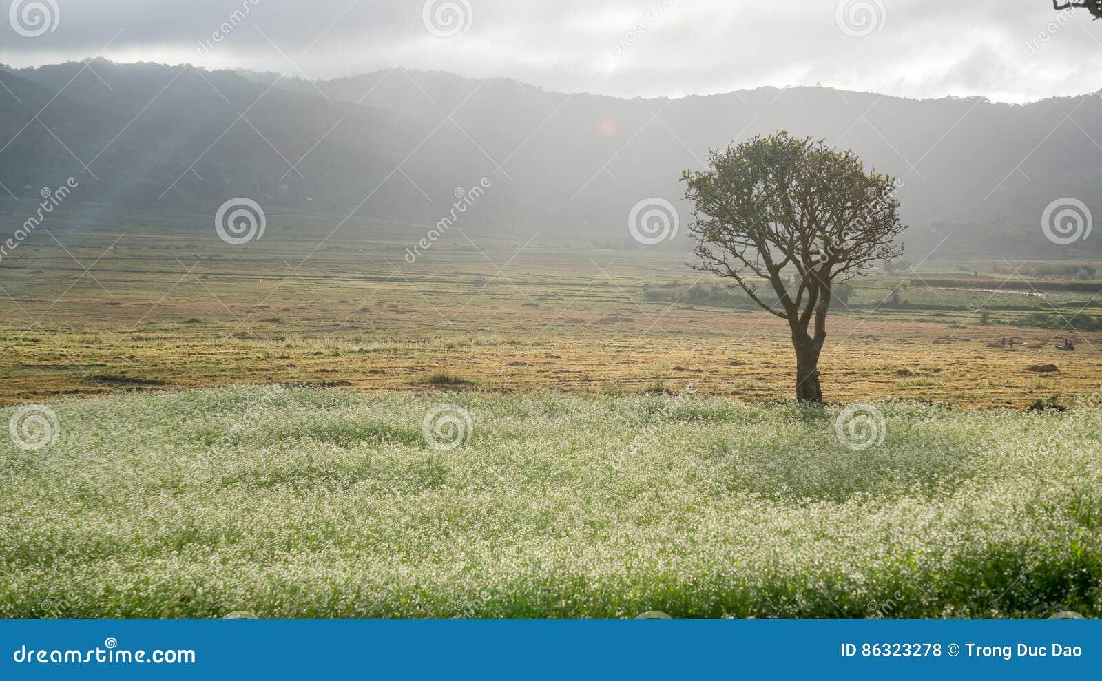 A árvore e a mostarda colocam com a flor branca em DonDuong - Dalat- Vietname