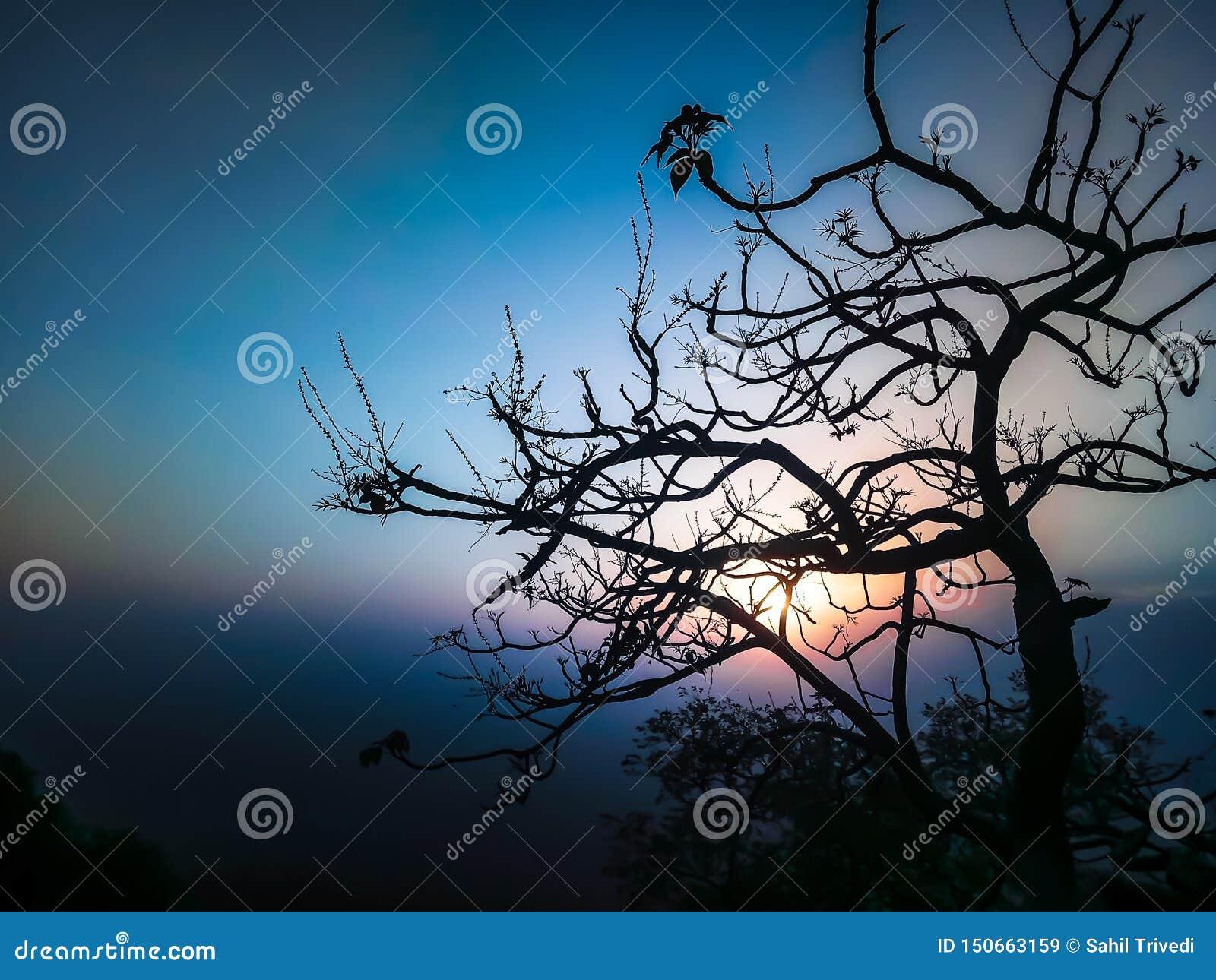 Árvore e um céu da noite do fundo do por do sol com um esquema de cor bonito e uso do tom perfeito um melhor como um fundo