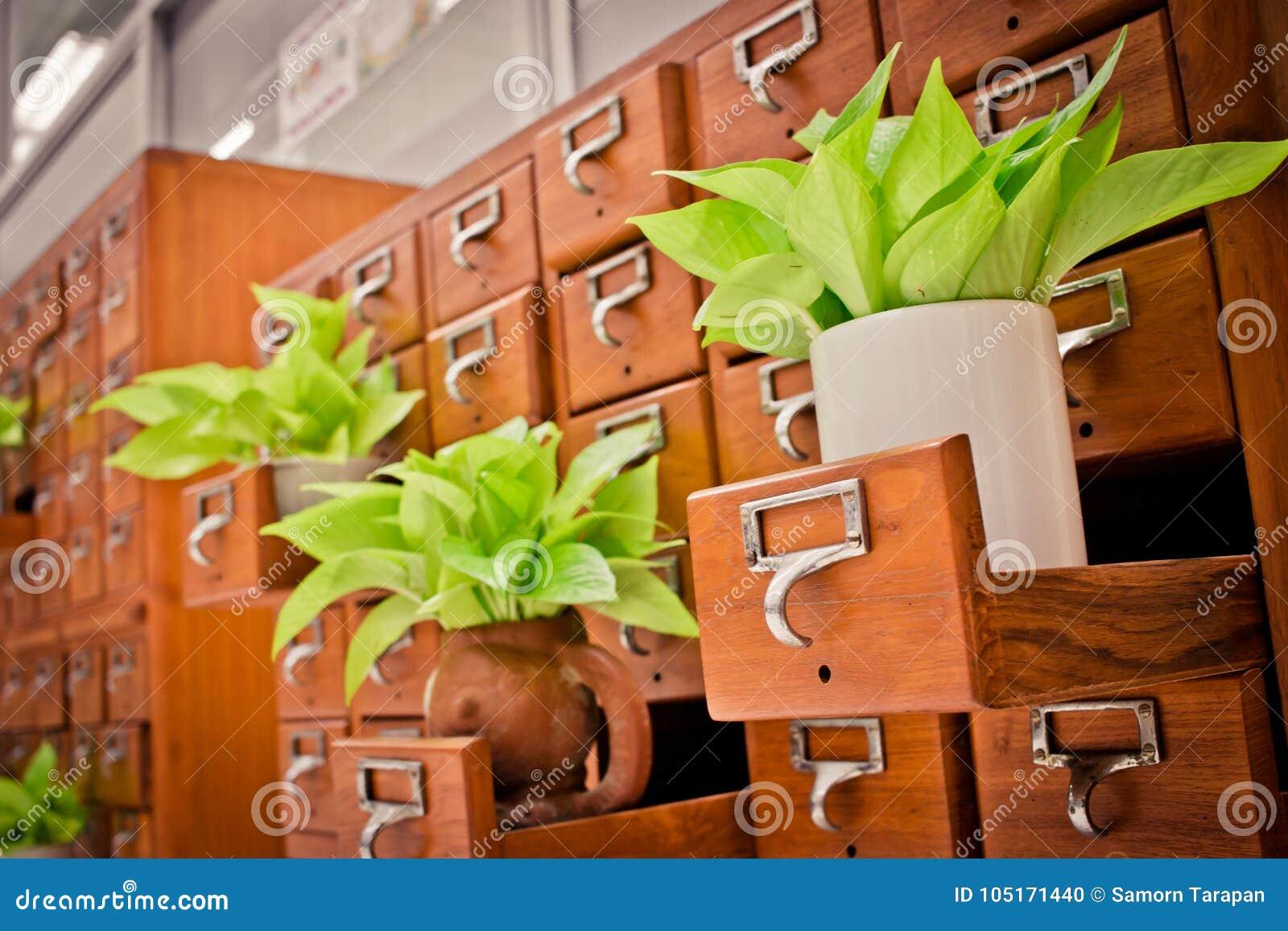 Árvore em caixas de madeira do armário Open no arquivo r da biblioteca ou do arquivamento