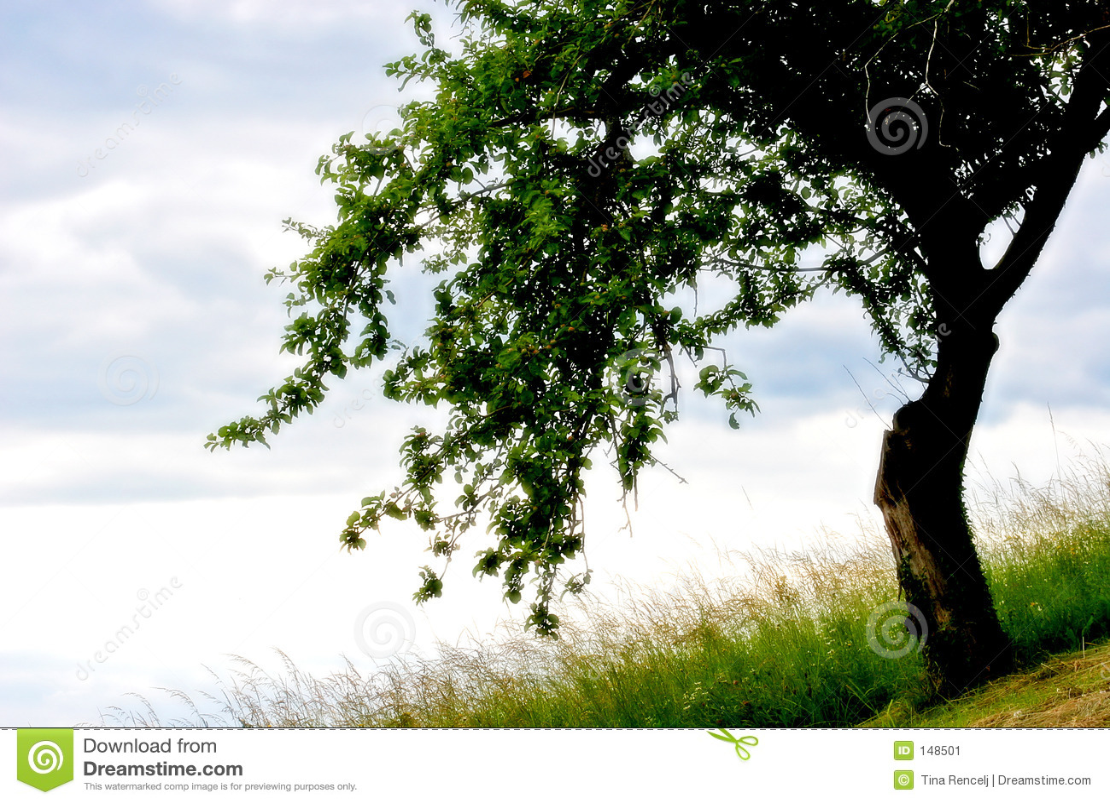 Árvore em meu sonho