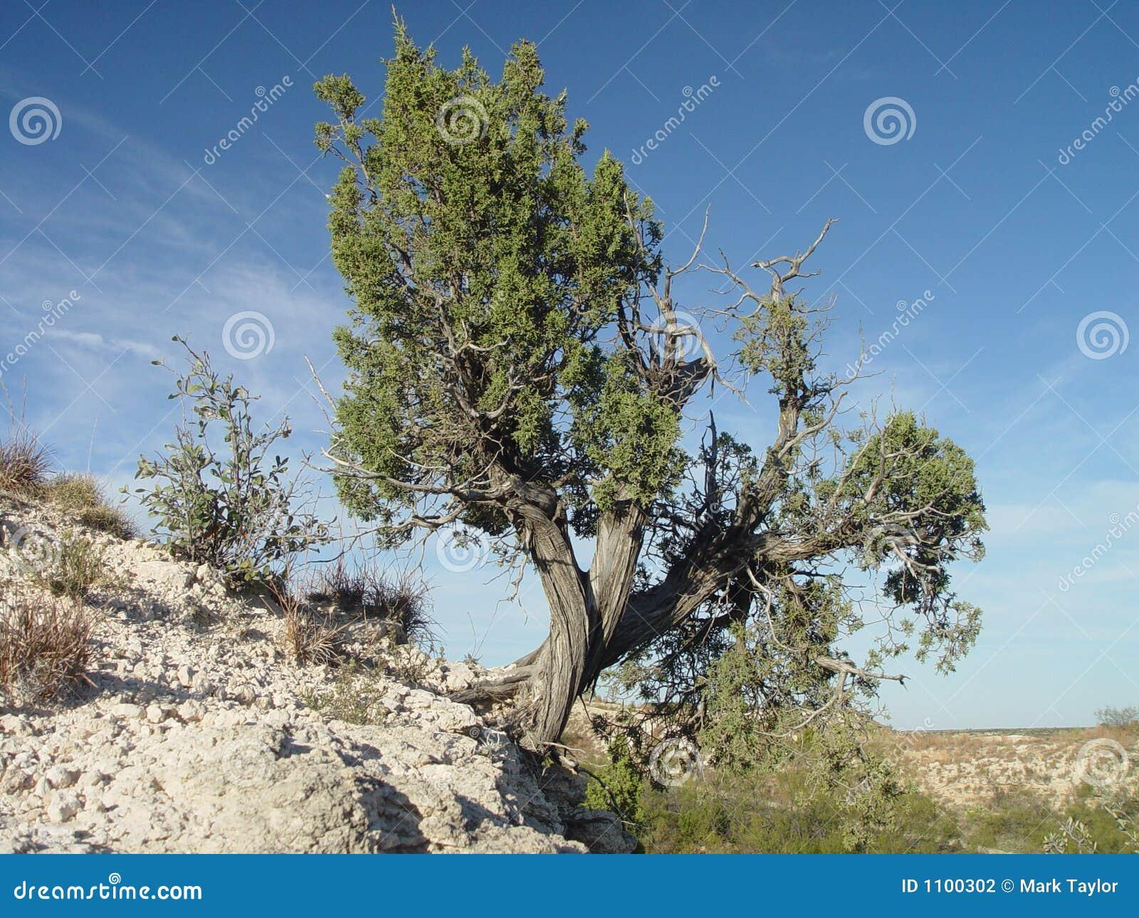 Árvore em um penhasco