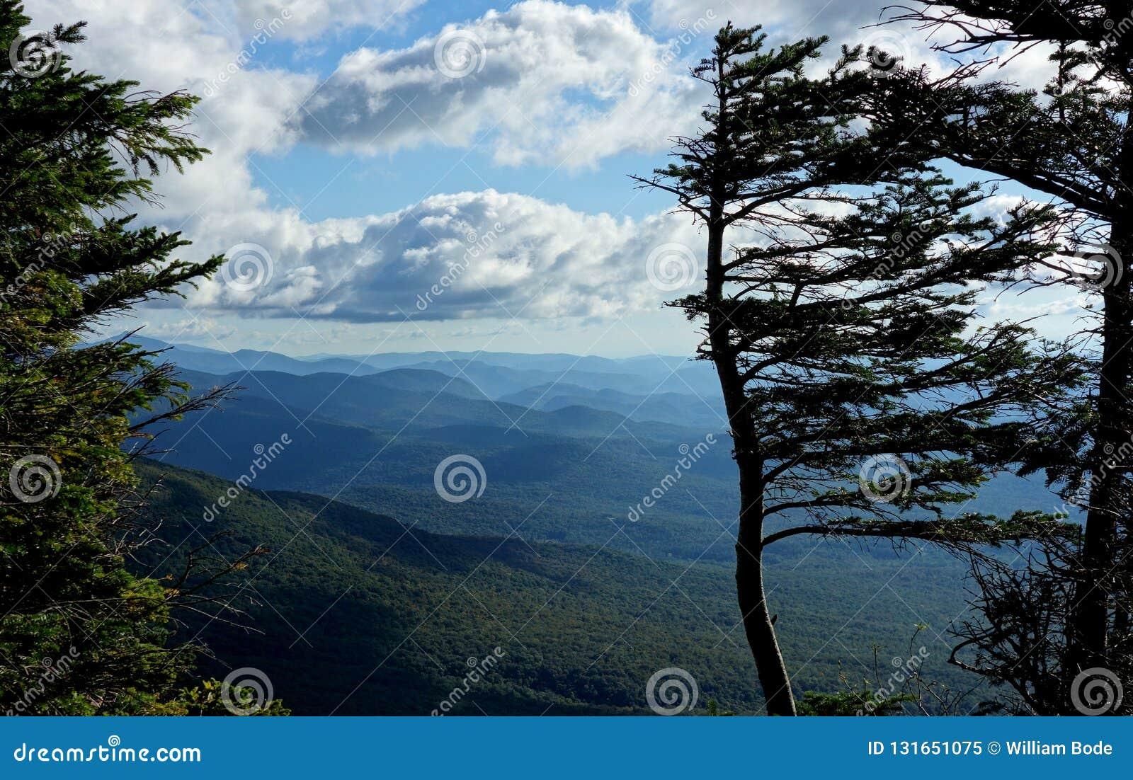 Árvore embandeirada vento na cimeira