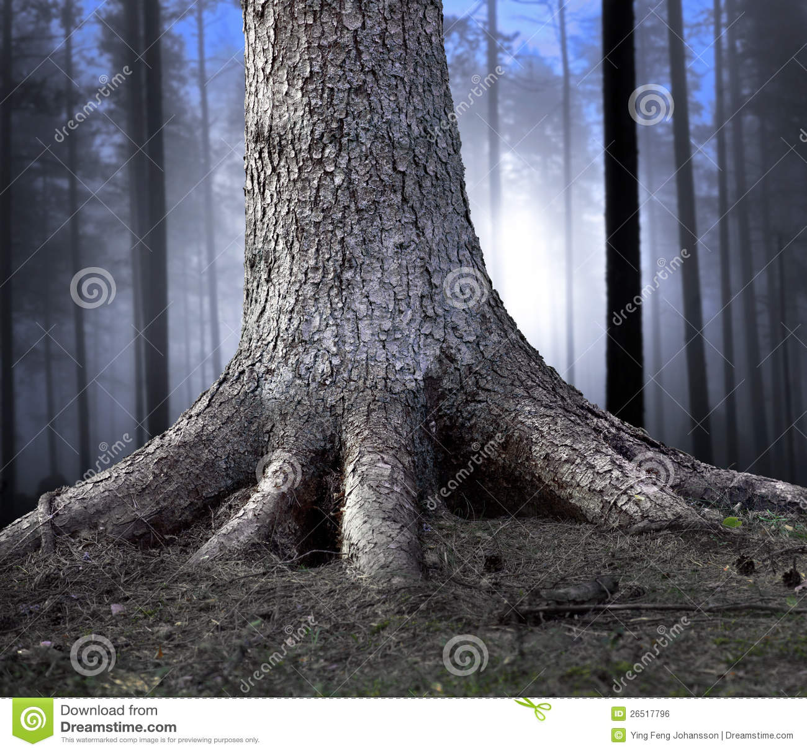 Árvore enraizada