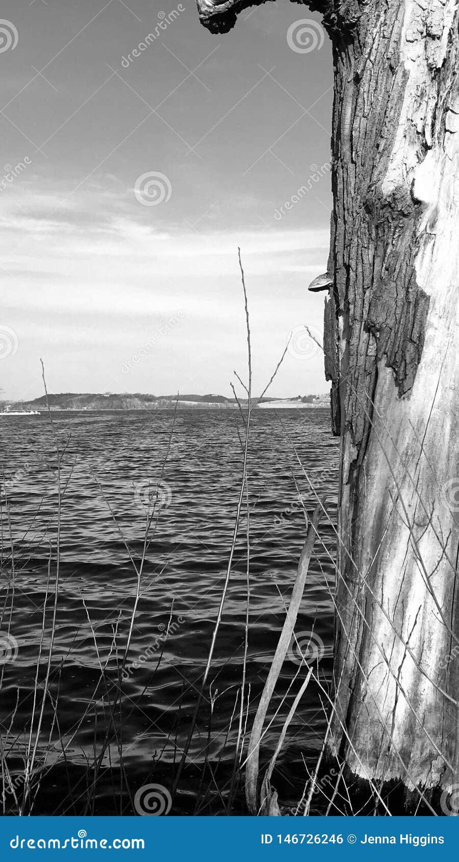 Árvore inoperante dos lagos wisconsin