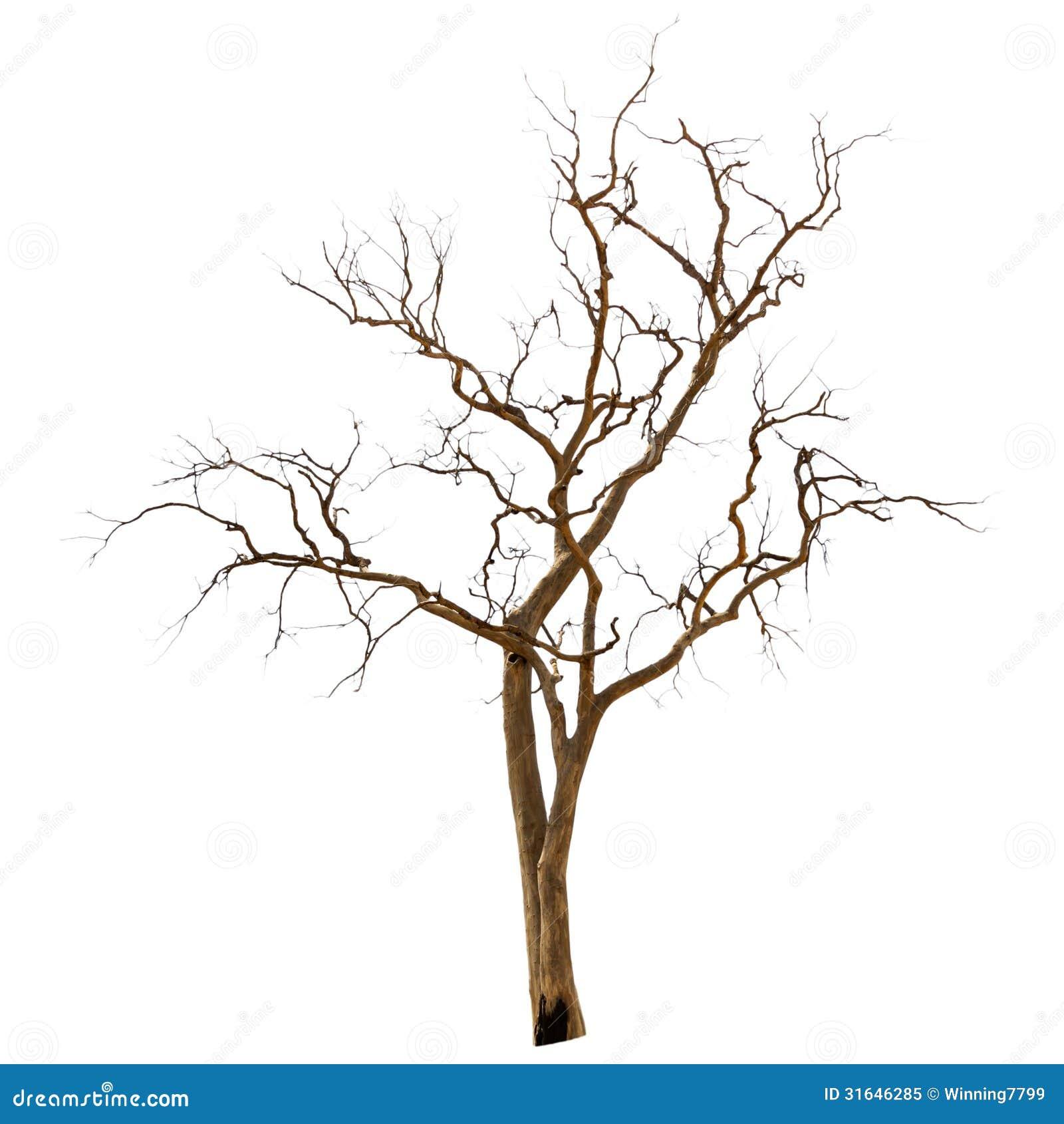Árvore inoperante e seca