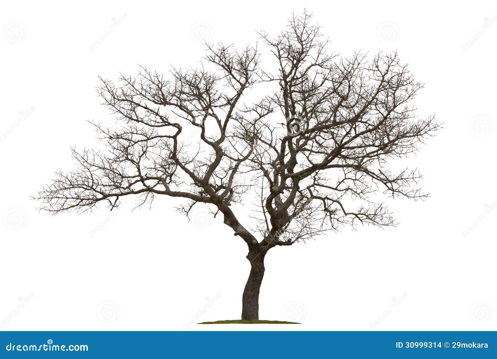 Árvore inoperante isolada com fundo branco