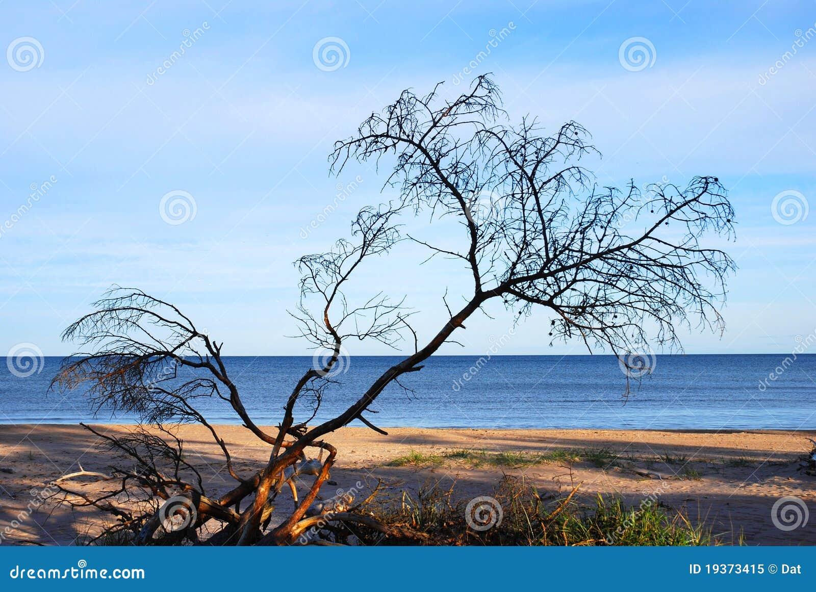 Árvore inoperante na praia