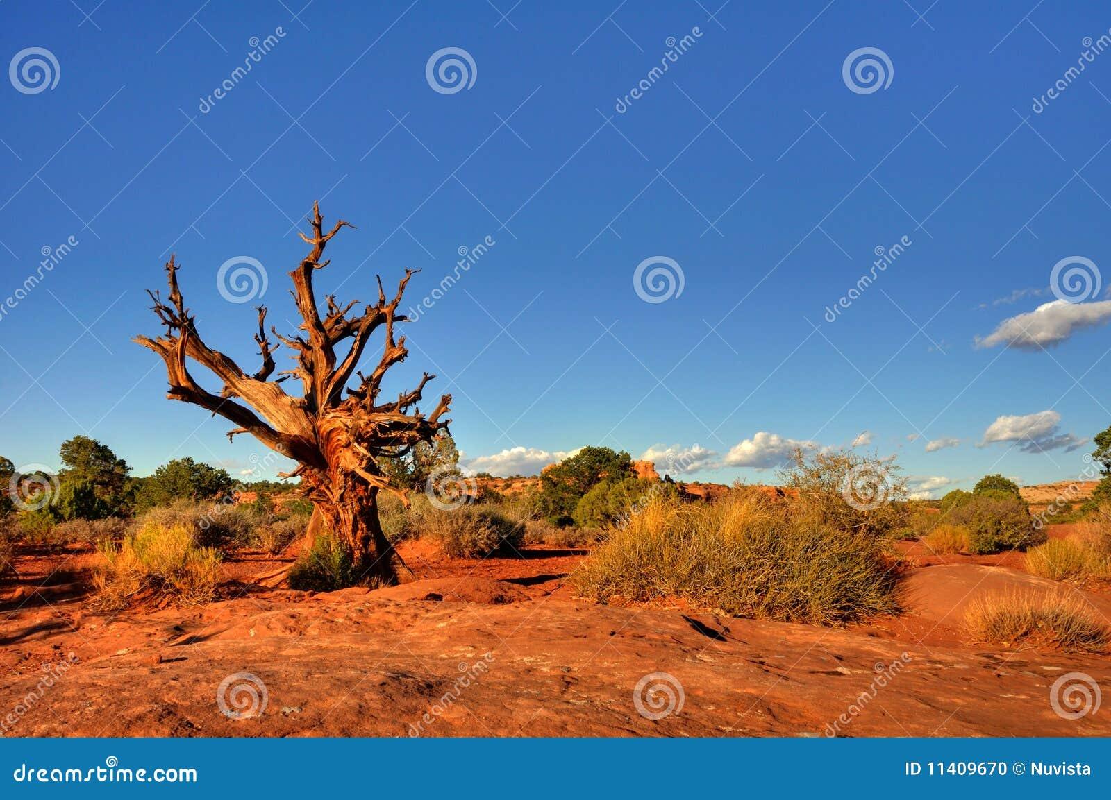 Árvore inoperante no deserto