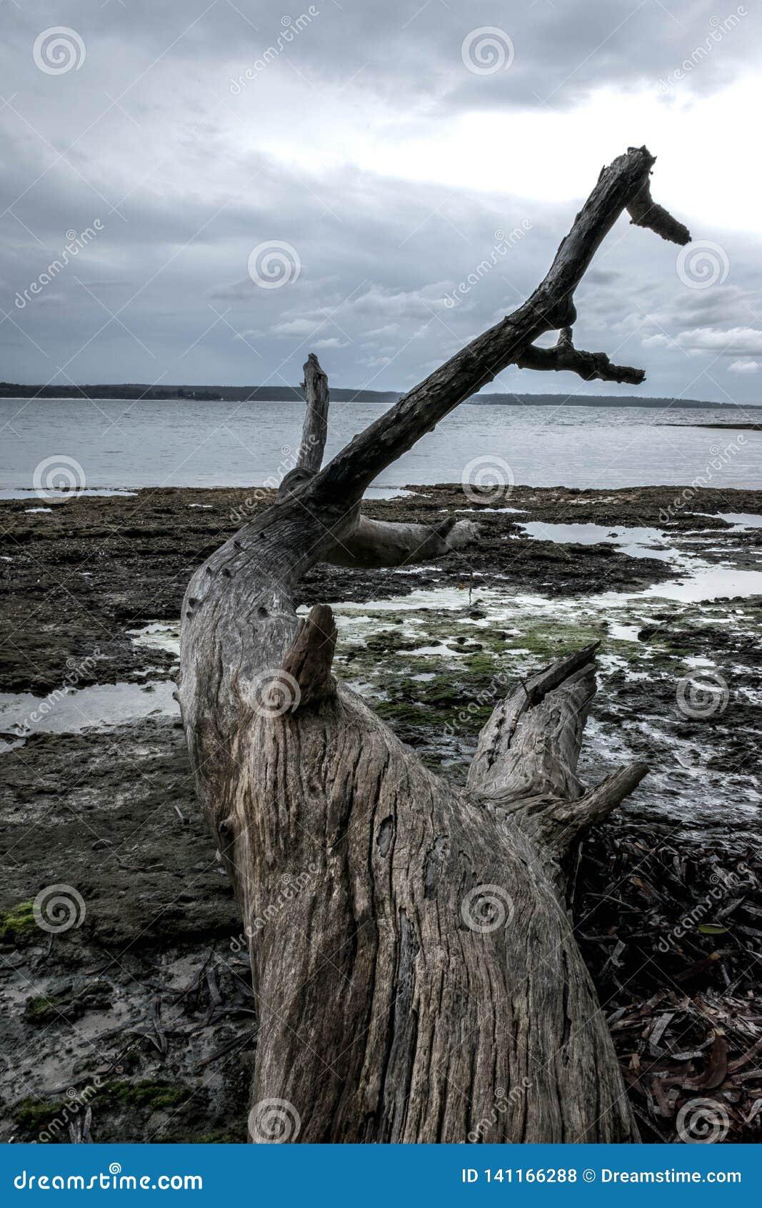Árvore inoperante pela praia