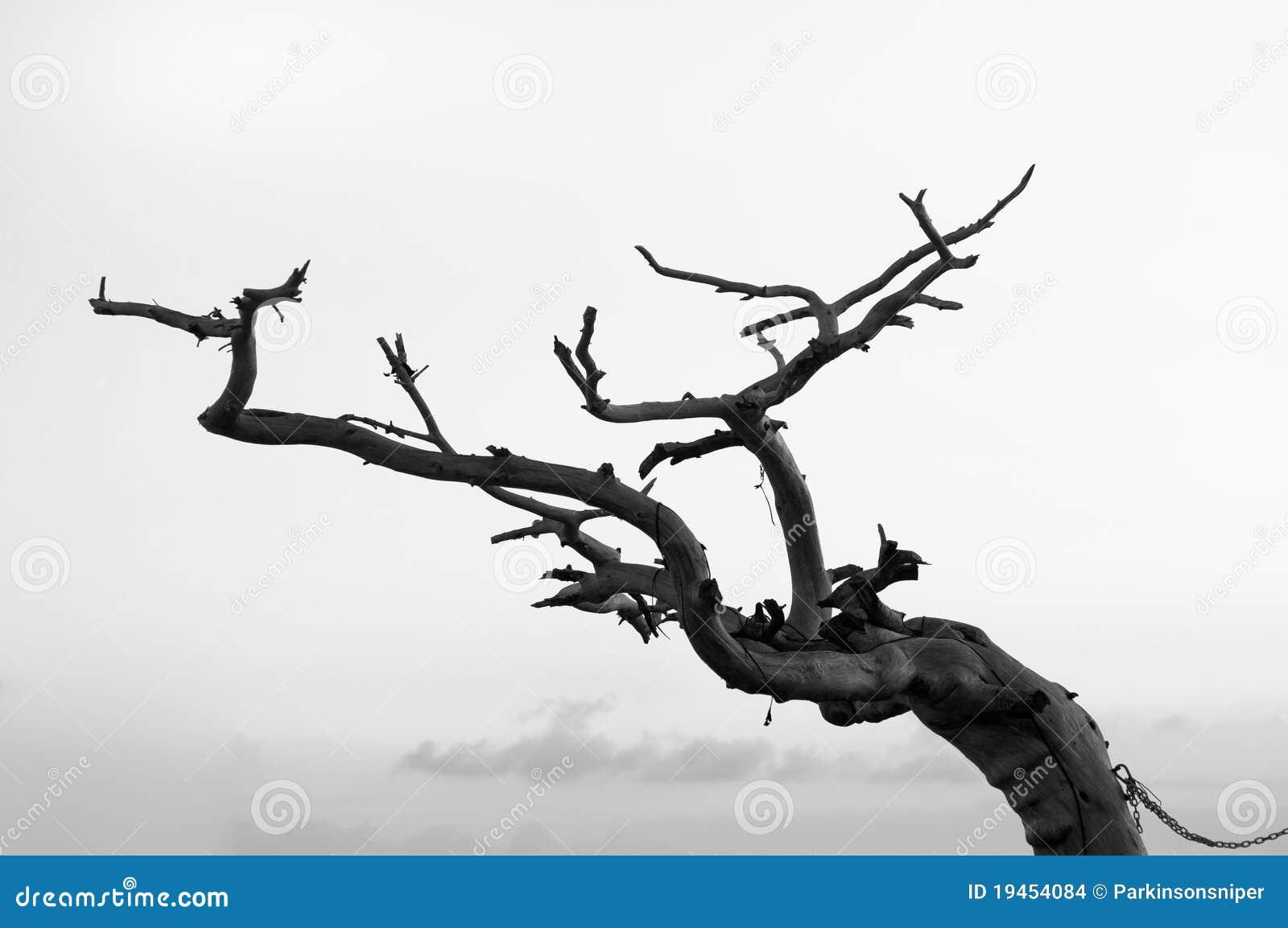 Árvore inoperante, tentando funcionar afastado