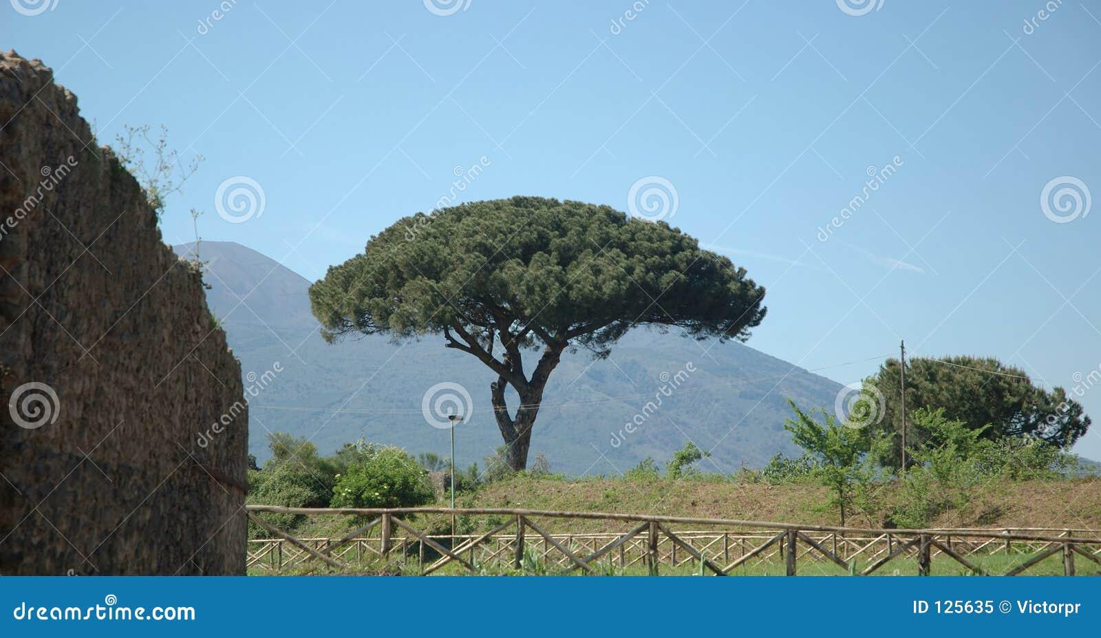 Árvore italiana