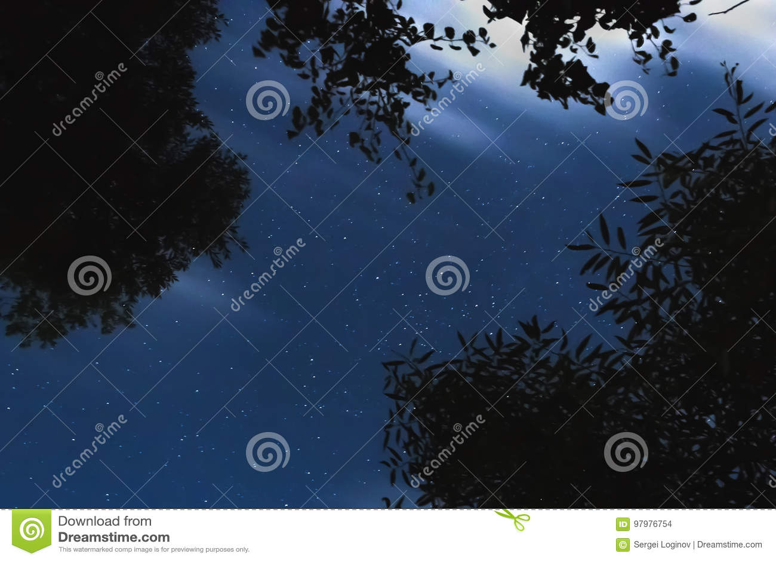 Árvore mostrada em silhueta na perspectiva do céu noturno