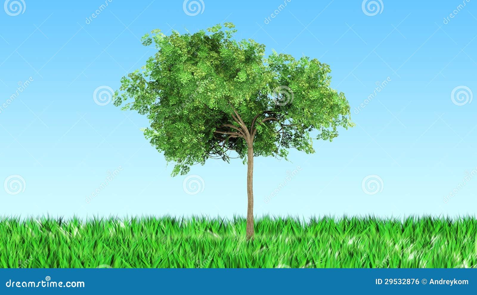 Árvore na grama
