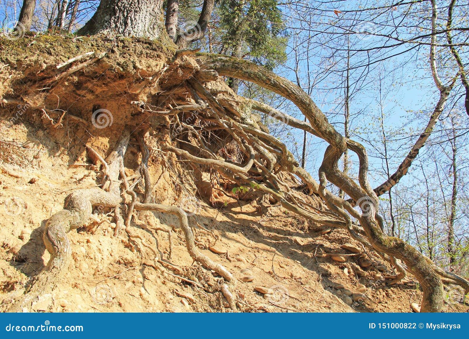 Árvore na inclinação seca