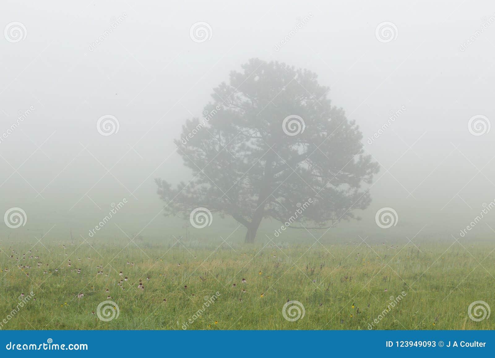 Árvore na névoa em Custer State Park em South Dakota