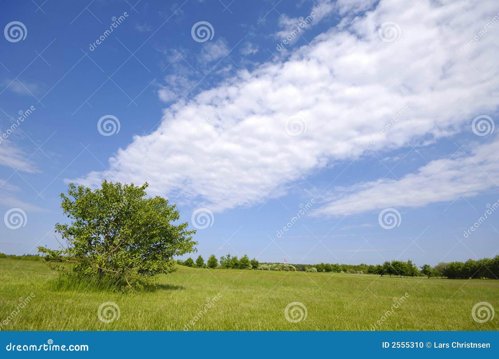 Árvore no campo verde