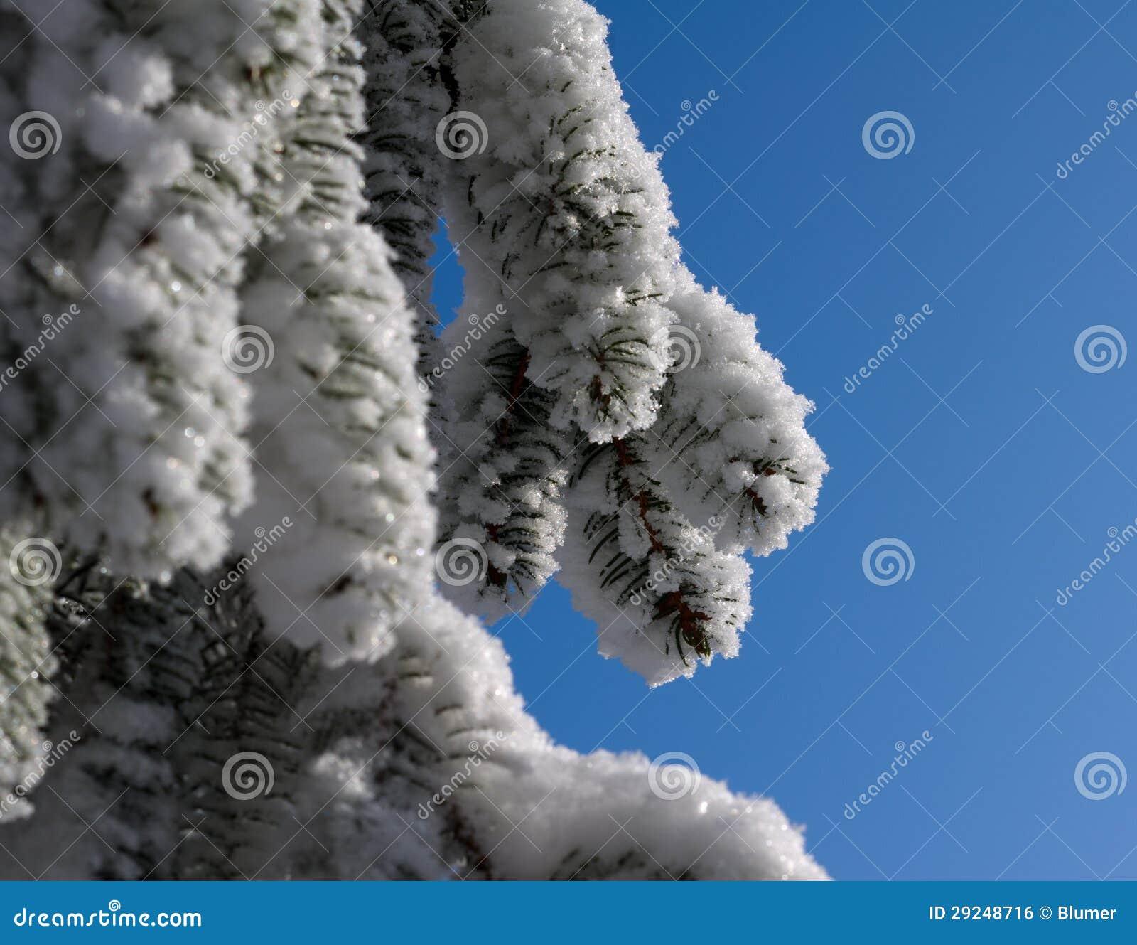 Download Árvore no inverno foto de stock. Imagem de snowfall, nave - 29248716