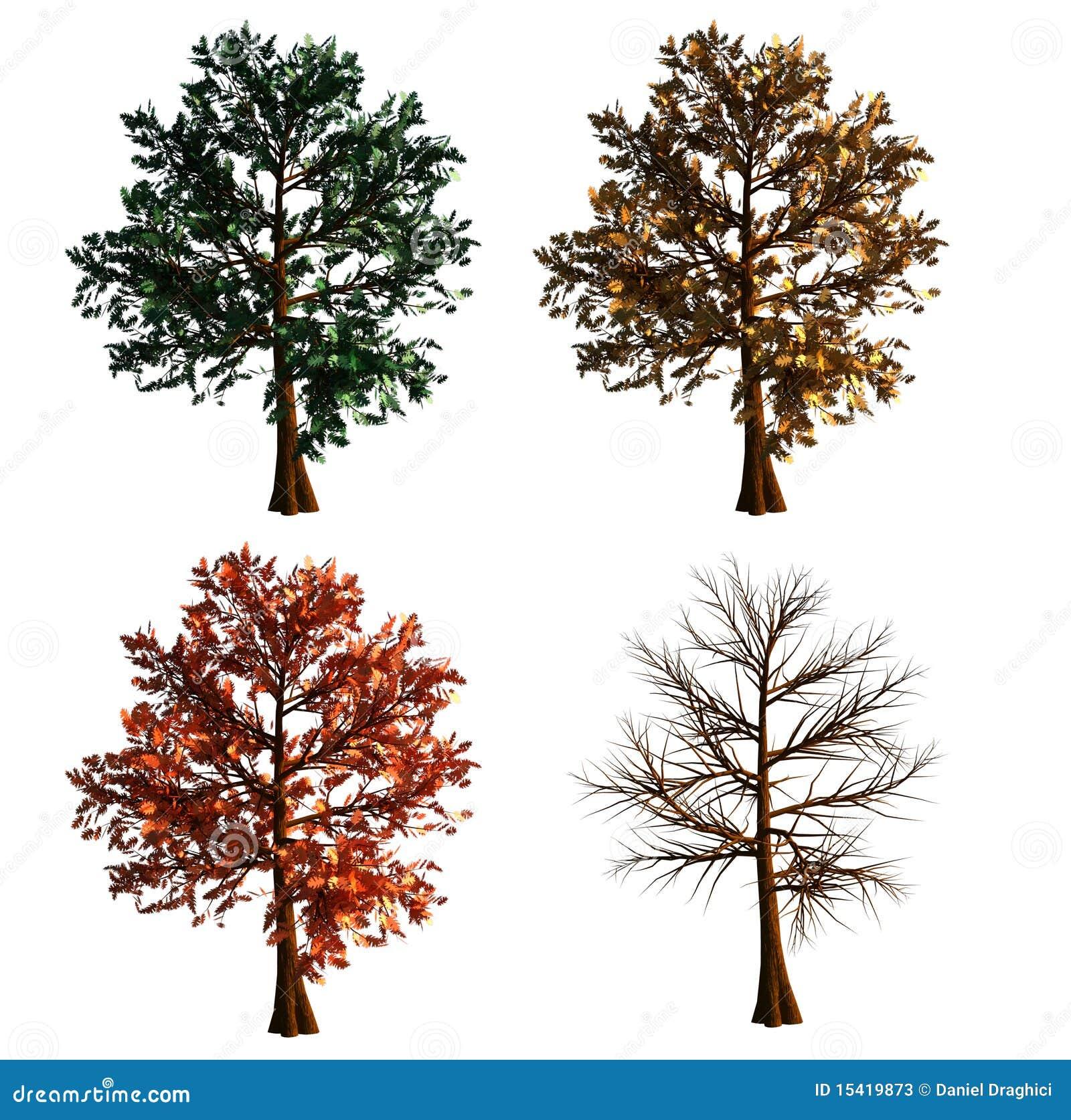 Árvore no isolado de 4 cores no fundo branco