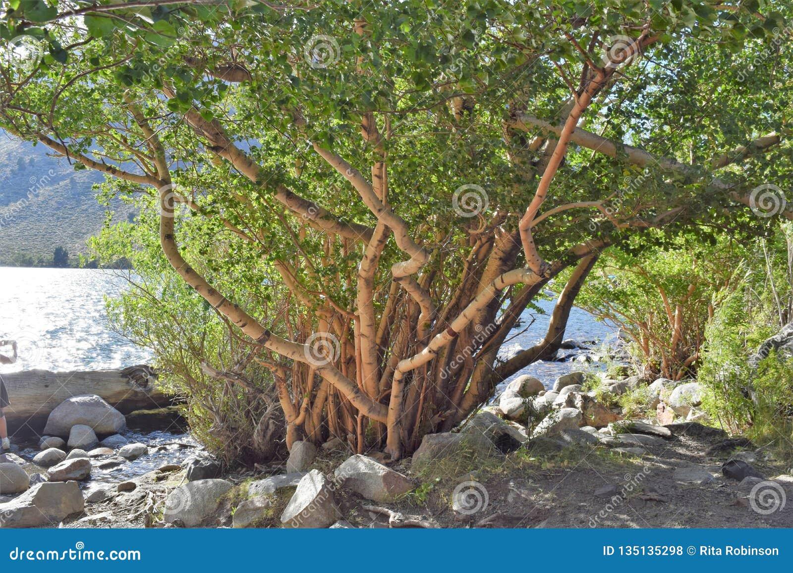 Árvore no lago com ramos torcidos