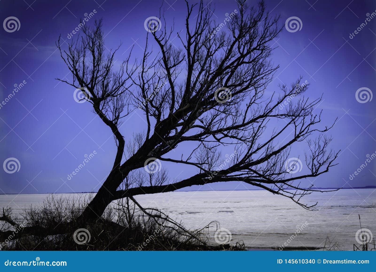 Árvore no lago Nipissing