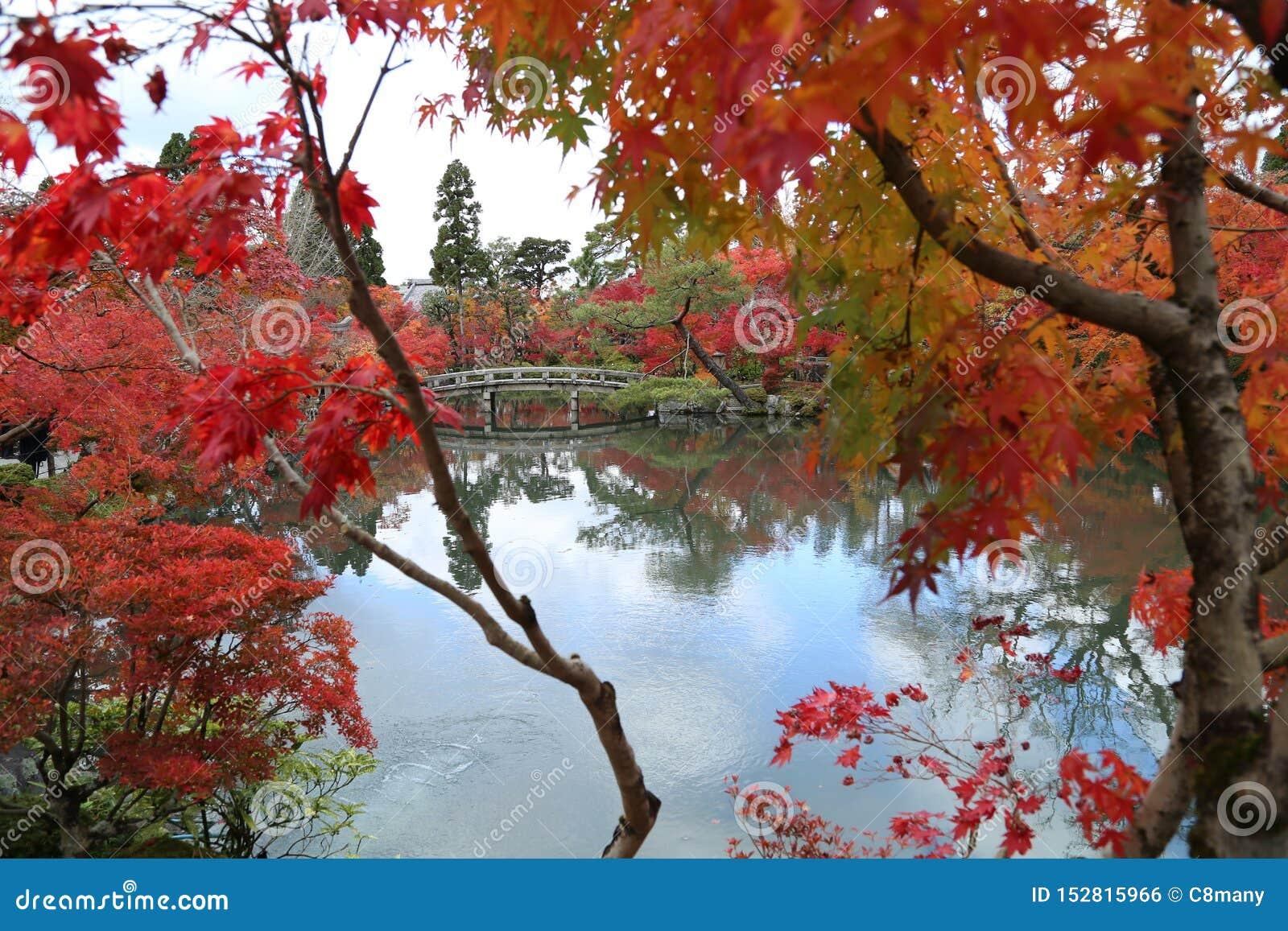 Árvore no outono em Japão