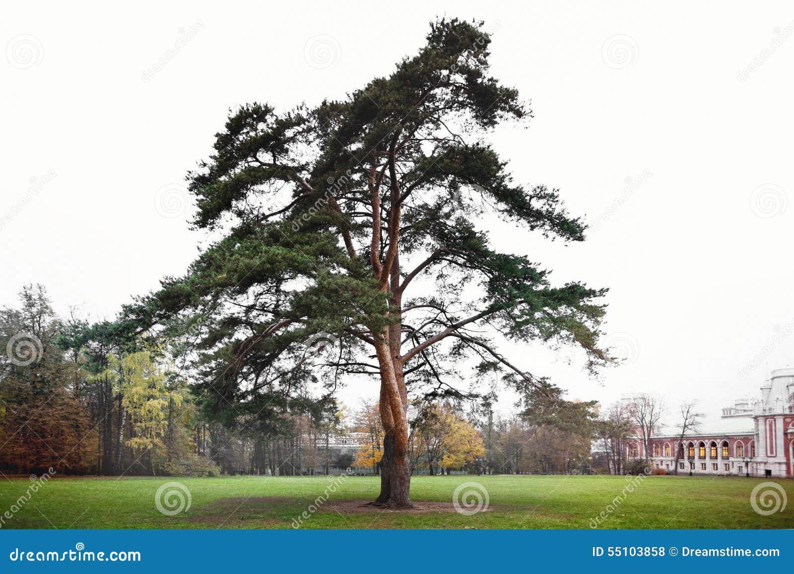 Árvore no parque