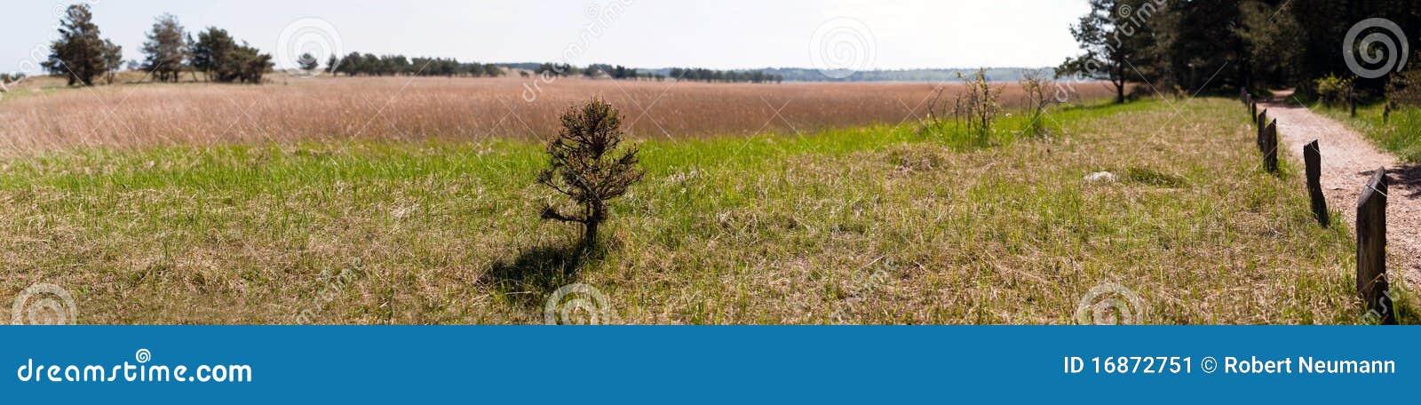 Árvore panorâmico da paisagem na parte dianteira