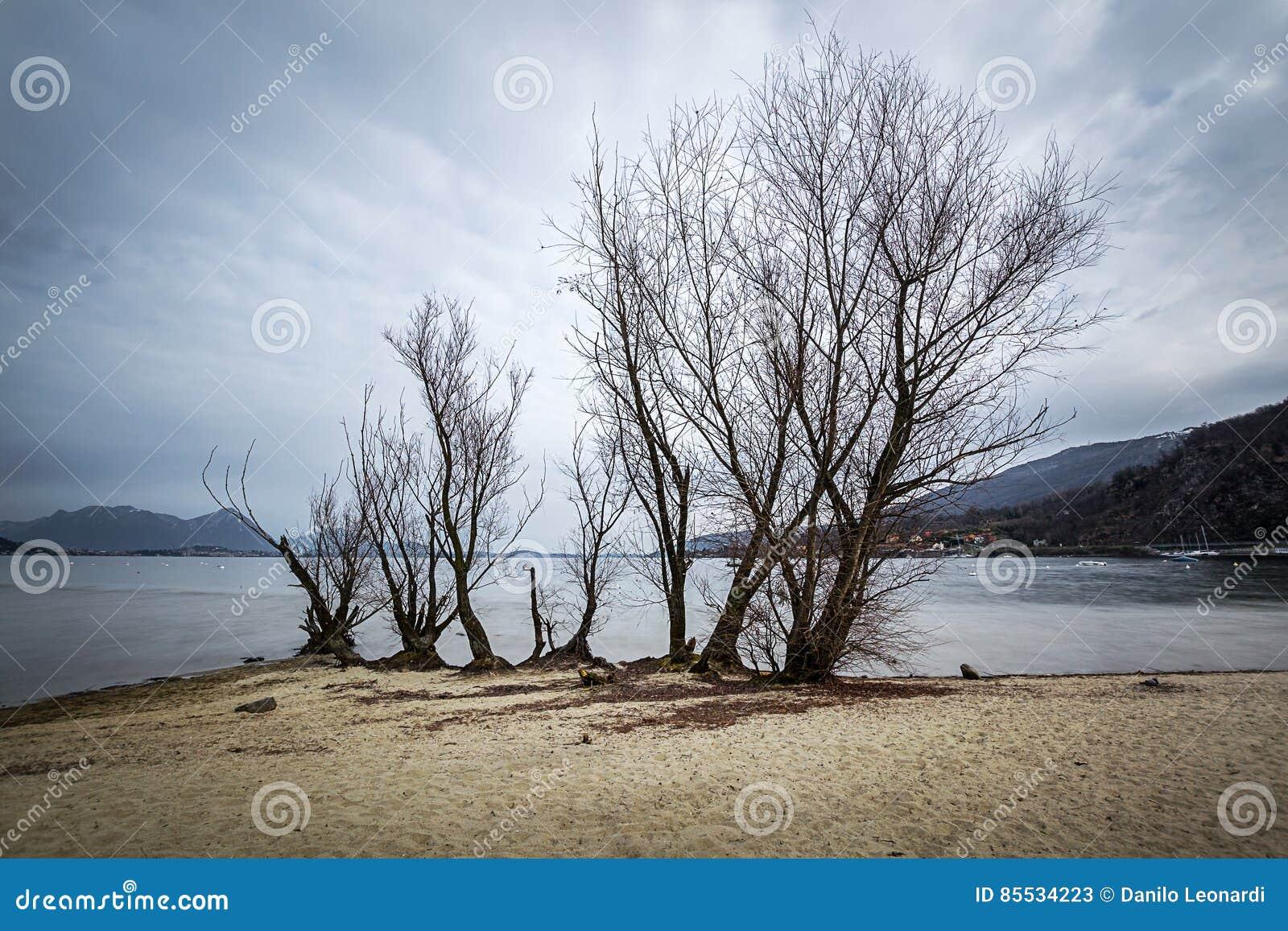 Árvore pelo lago