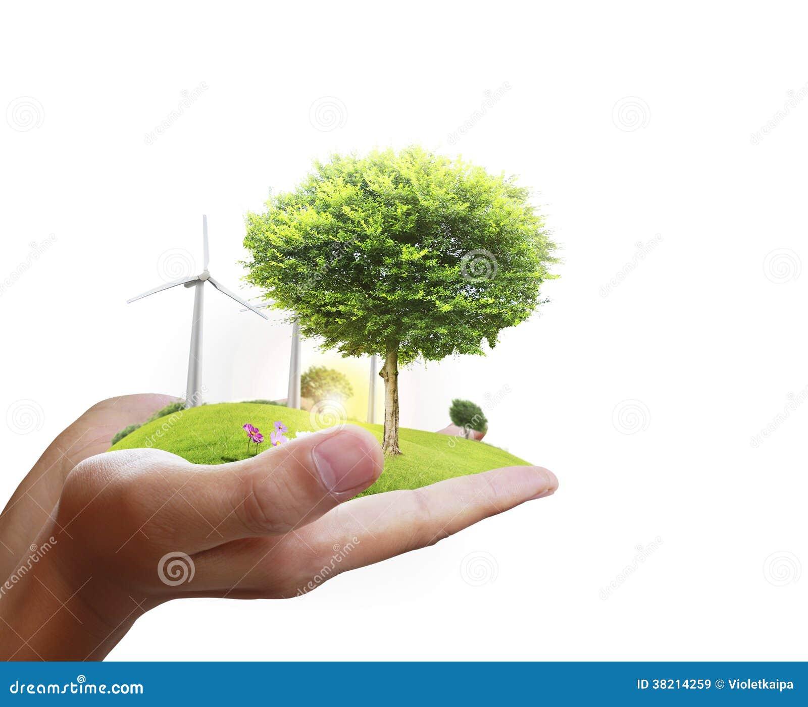 Árvore pequena em uma mão