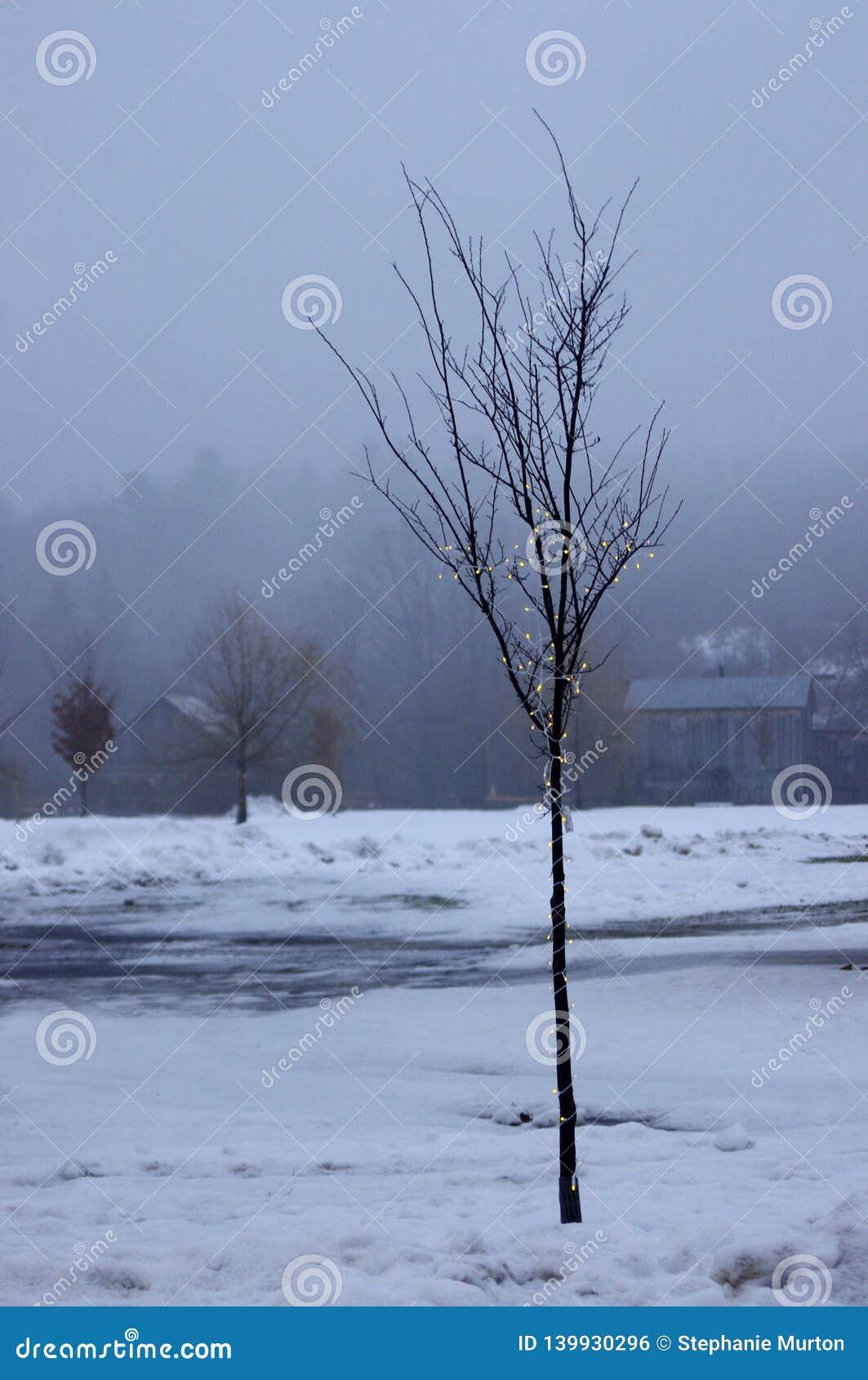 Árvore pequena temperamental com luzes na névoa