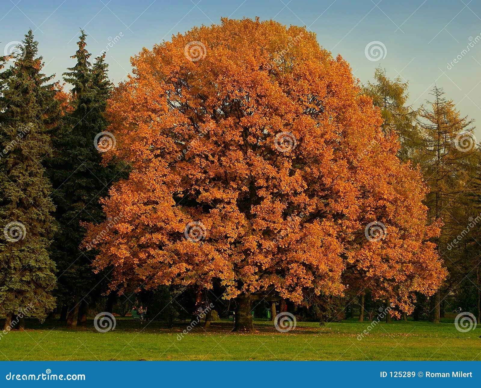 Árvore perfeita