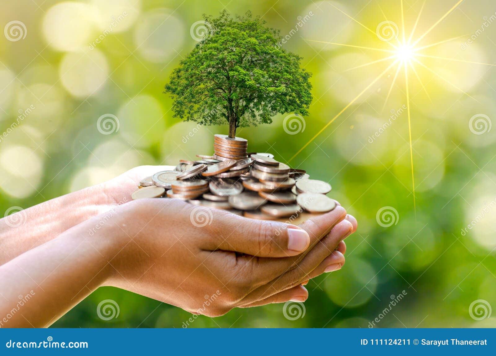 Árvore que da moeda da mão a árvore cresce na pilha Dinheiro da economia para o futuro Ideias do investimento e crescimento do ne