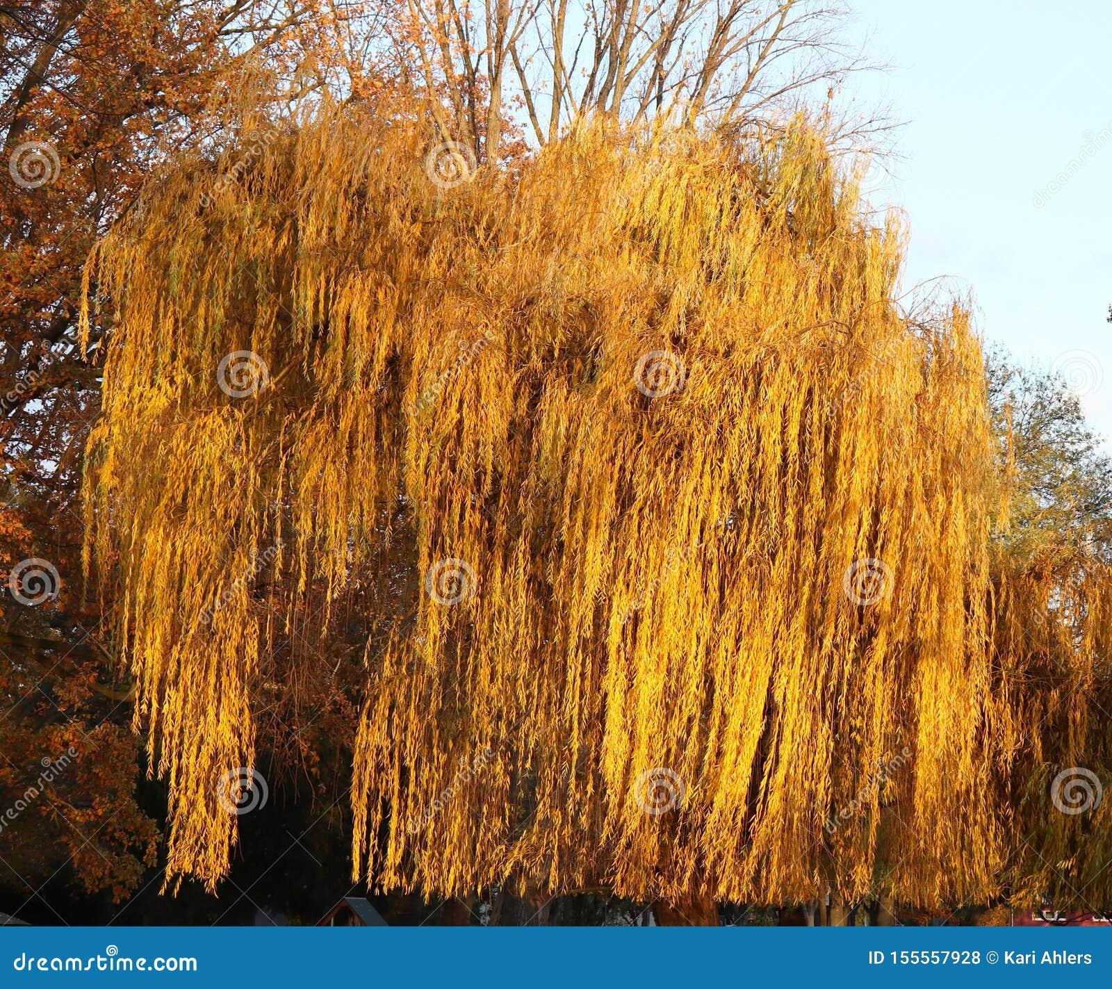 Árvore que olhares como um animal em Alemanha