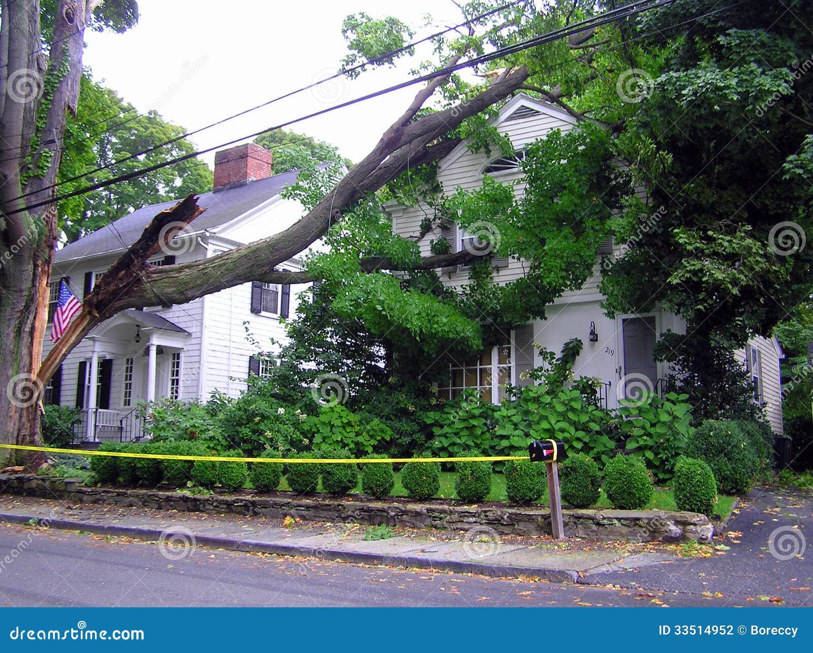 Árvore quebrada na casa - dano do furacão